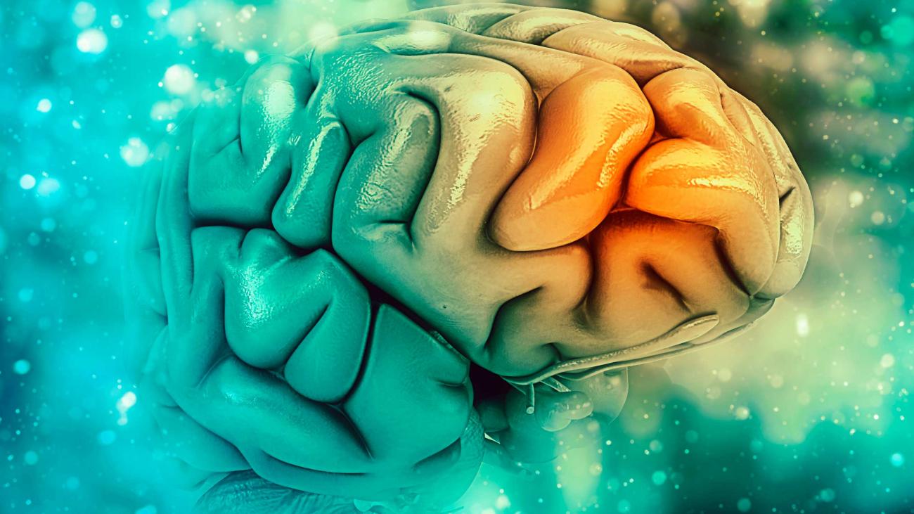 Rejuvenating' the Alzheimer's brain
